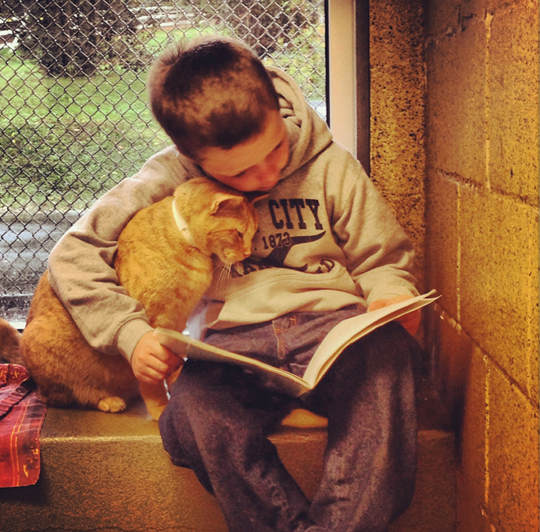 Animal Rescue League of Berks County children can read to shelter cats to soothe them.